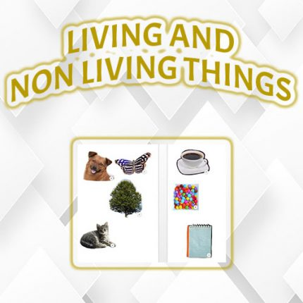 Living & Non-Living Things